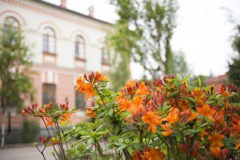 Весеннее цветение в Гостинице
